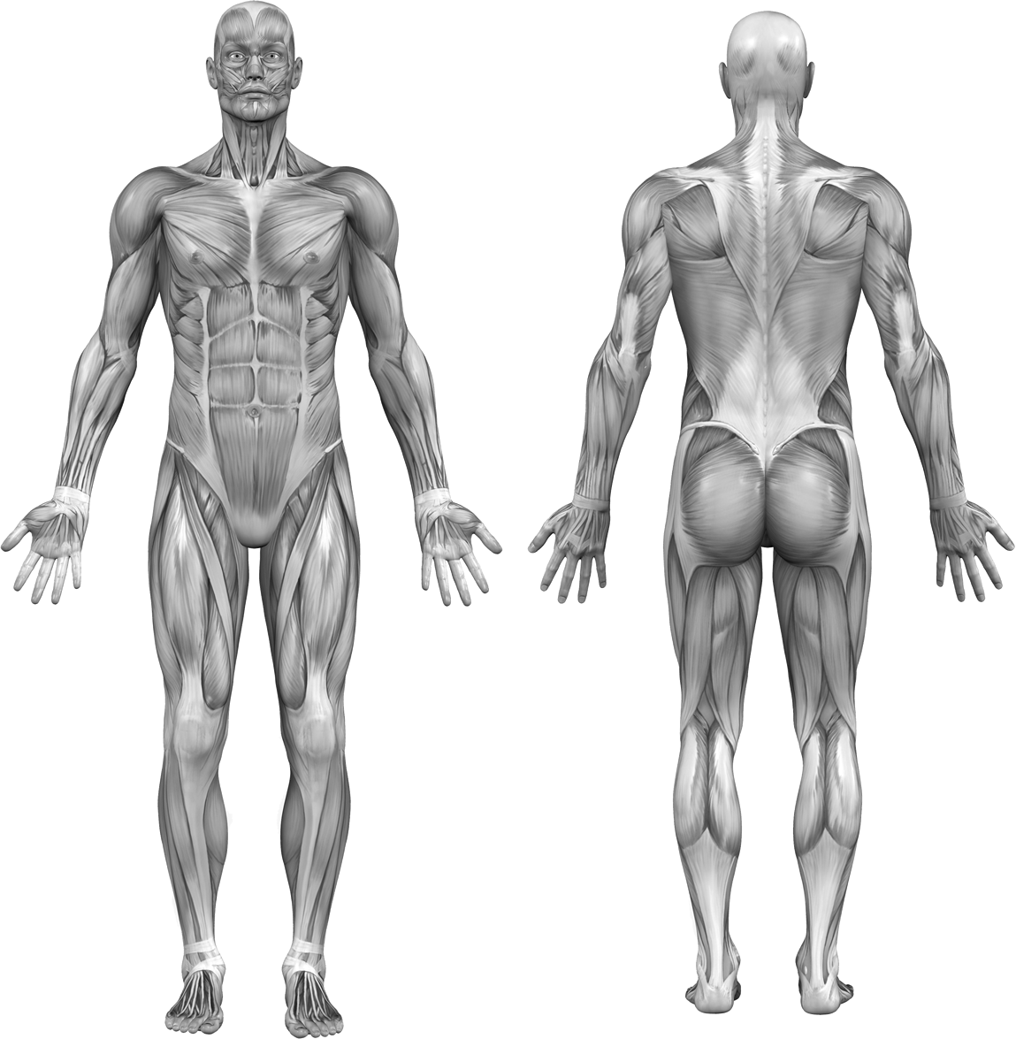 Find Training Videos by Muscle Group