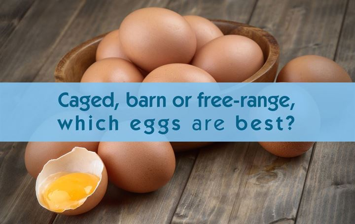 Caged, barn or free-range, which eggs are best?