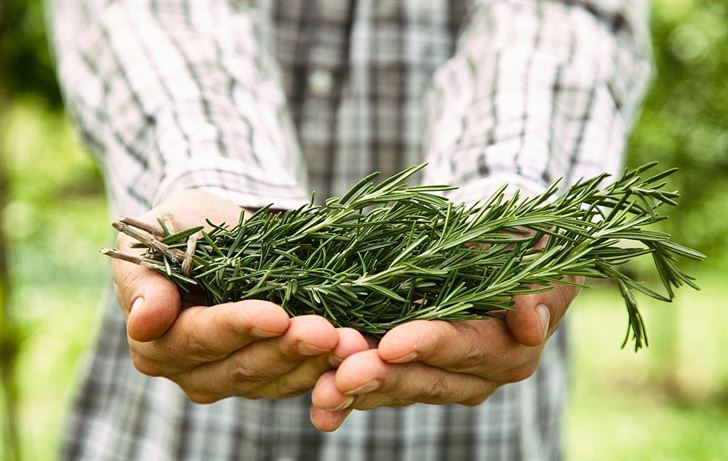 The surprising way rosemary helps your memory
