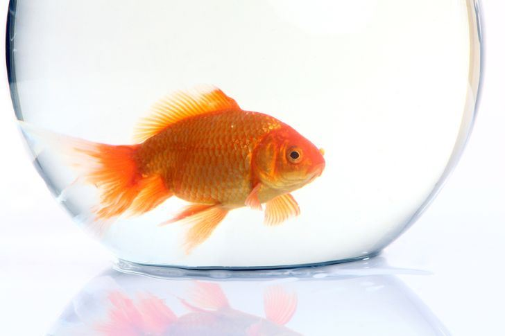 Which pet is best for your lifestyle for How much does a fish cost